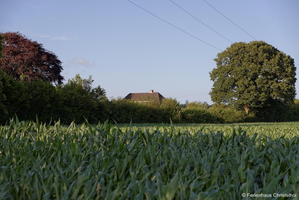 Fields surrounding the Christelhoi holiday home