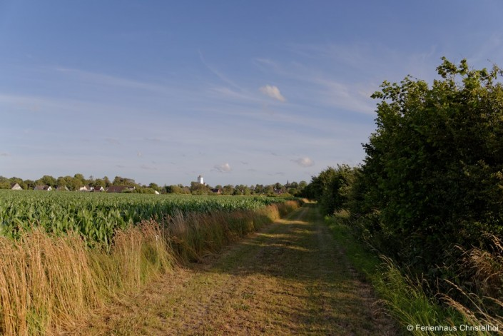 Fields surrounding the Christelhoi holiday home