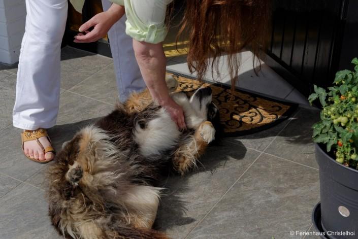 Hofhund Leila kommt täglich zu Besuch!